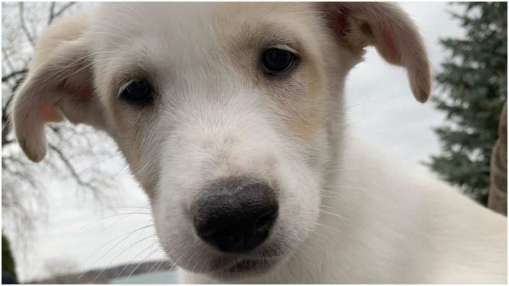Puppies NHL players Boeser PHT Morning Skate